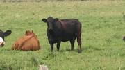 Profitable Pastures Free Webinar Series