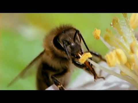 NOVA Bees Tales From the Hive