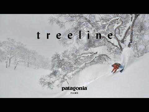 Treeline  | The Secret Life of Trees