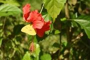rincon fleurs et papillon