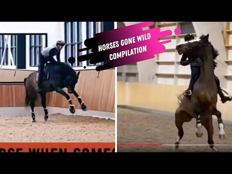 Horses Gone Wild- Funny Horse Compilation