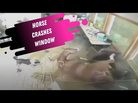Horse Crashes Through Window - Equestrian Nightmare!