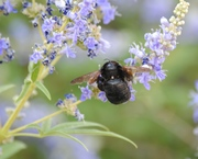 BEE CITY: COMMUNITY SOLUTIONS TO REDUCE PESTICIDE USE