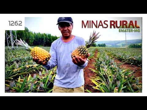 MINAS RURAL - 1262 - 19/02/2020 - ILPF