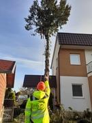 pisto-stav s.r.o. arboristika, pílenie stromov, údržba zelene