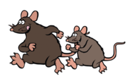 Possum Piper is the top Possum Removal Services in Sydney