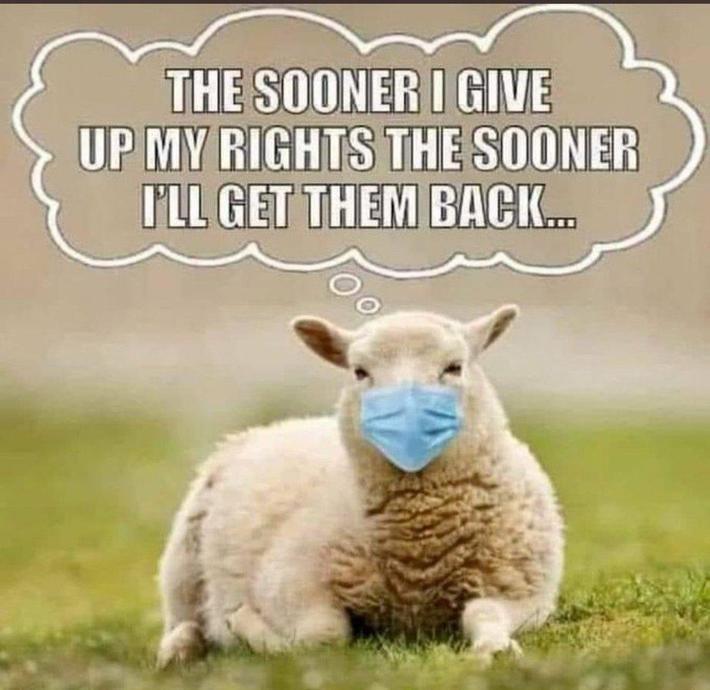 Sheep Think