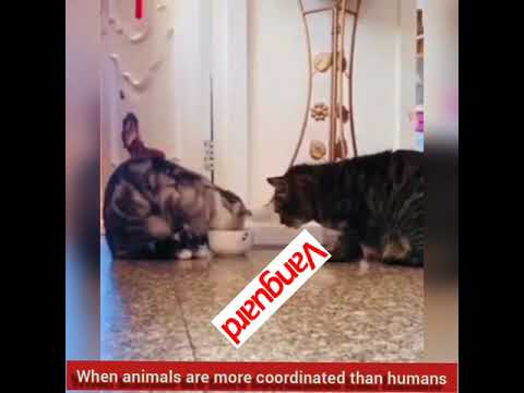 When animals are more coordinated than humans