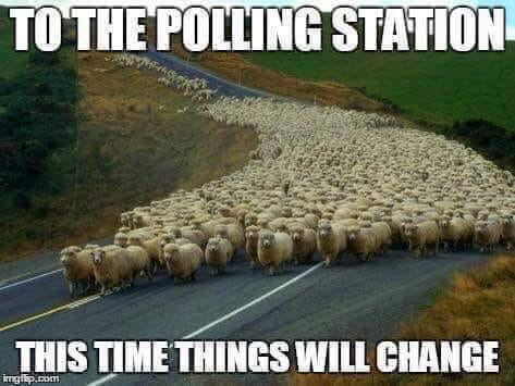sheeple-mob-to-polling-booth