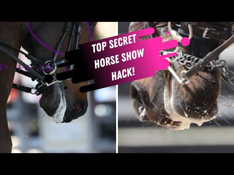 Top Secret Horseshow Hack They Don't Want You To Know About!
