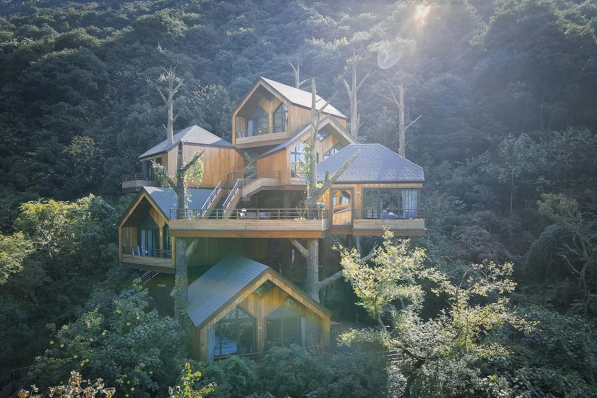სახლი, კოტეჯი, სასტუმრო, სოფელი, შტაბი, ხე, ბლოგი, qwelly, qwellygraphy