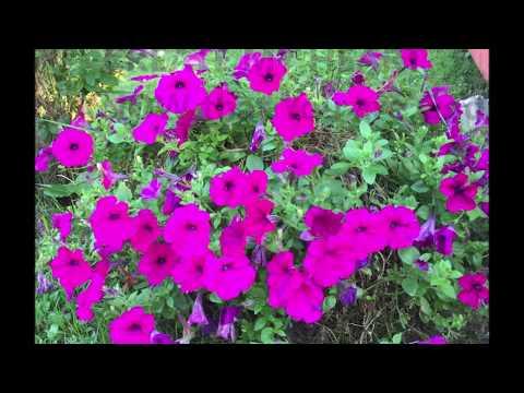 CREATE MY HEART video by Lorraine Howard