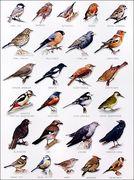 Paddock Bird Surveying