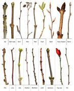 Paddock Tree Surveying