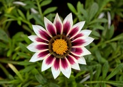un semplice fiorellino