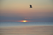Seascapes - A NEW DAY