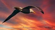 seagull on the horizon