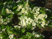 Springtime in La Colline éclairée, Vajra's garden n Belgium