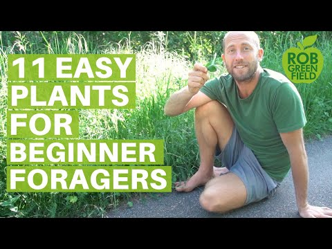 11 Easy Edible Plants for Beginner Foragers- Eating Wild Food