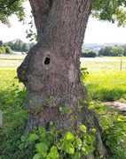 Easter Bunny Tree...