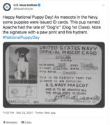 nationalpuppyday