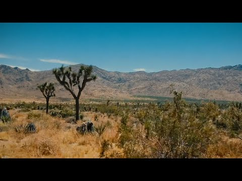 "Ben Harper - ""Joshua Tree"" (Band Version)"