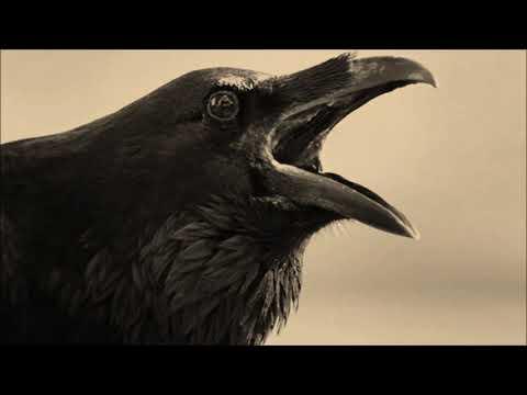 Black Crow Blues              Dylan -  A . D. Eker    2021