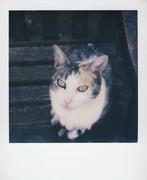 C'era una volta una gatta..