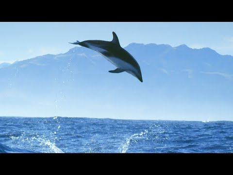 Diving With Dolphins - Joy | Mindful Escapes | BBC Earth