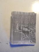 flycult #1