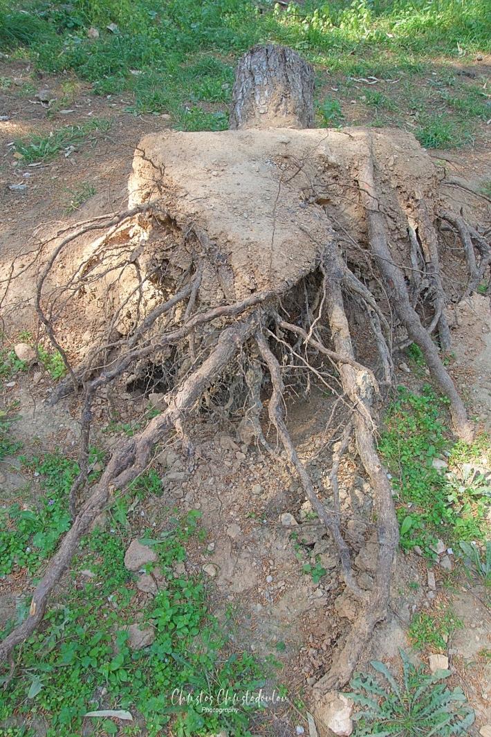 Αν ένα δέντρο πέσει στο δάσος...