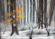 """""""Entre automne et hiver"""""""