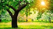 Fond ecran soleil printemps (1)