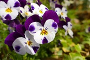 flowers-1369518_960_720