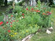 ADVANTAGES OF THE MODERN COTTAGE GARDEN