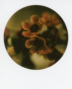 blooms 02