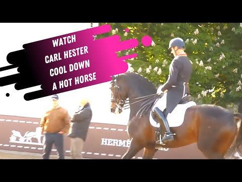 Watch Carl Hester Ride A Hot Horse In The Grand Prix Dressage Warm Up