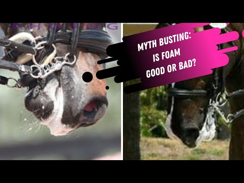 MYTH BUSTING: Why Do Horses Foam At The Mouth?