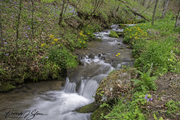Mountain Stream in Springtime