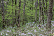 Springtime in the Mountains