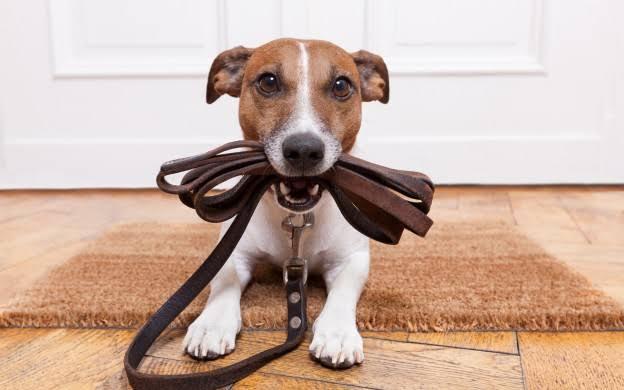 CLDF quer vetar a proibição de animais em condomínios