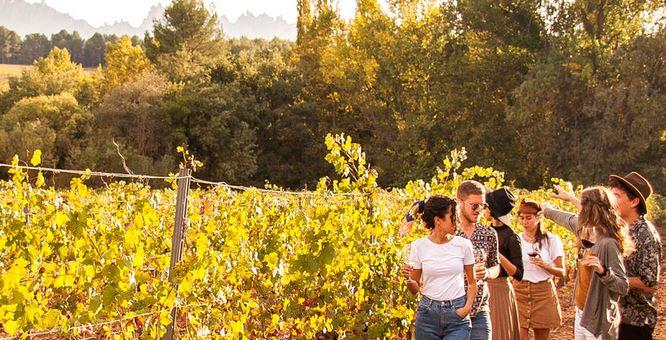 Chilean Wine Tours