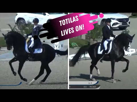Totilas Progeny Dominate Dressage  - Black Is The New Gold