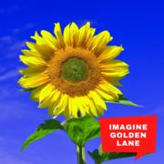 Imagine Golden Lane
