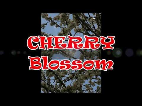Cherry Blossom      (Instrumental )                              A. D. Eker                   2021