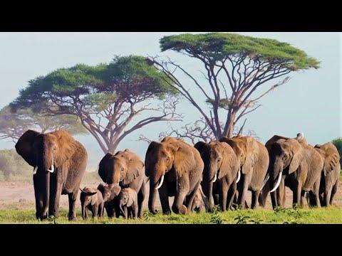 Do Animals Feel Empathy?   Animal Einsteins   BBC Earth