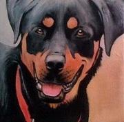 Rottweiler No1 8X8 Acrylic on gallery canvas