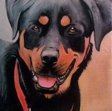 Rottweiler No1 8X8 Acrylic on gallery canvas