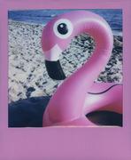 Tutti i fenicotteri sono rosa