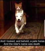 ...A Pale Horse